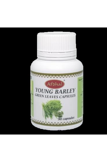 Kapsul Young Barley Green Leaves